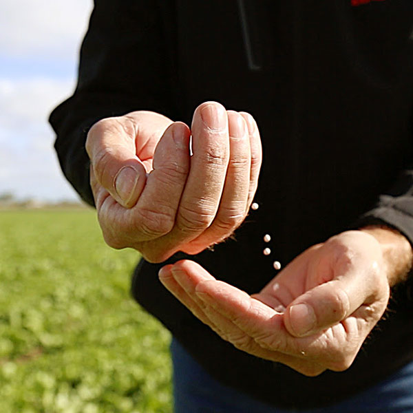 An image of a man holding seeds.