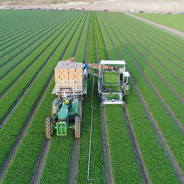 An image of machinery on a crop field.