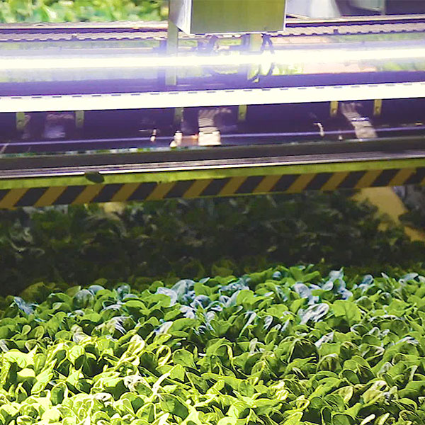 A machine sorting plantlife